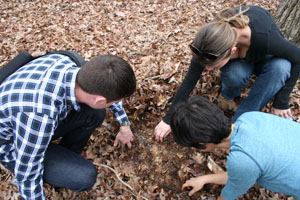three ant scientists dig in the dirt with their hands