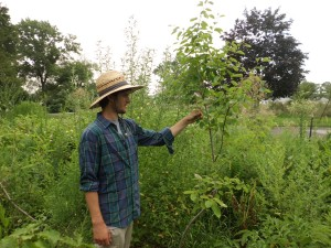 Andrew Collins in the field observing a plant.