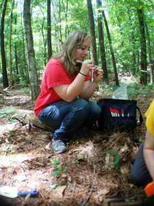 Mary Vincent swabs ant nests for microbes.