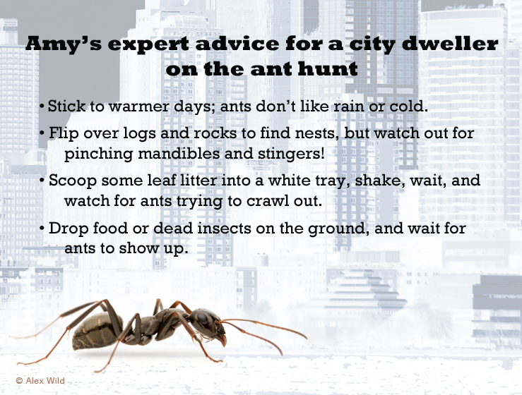 Amy expert advice