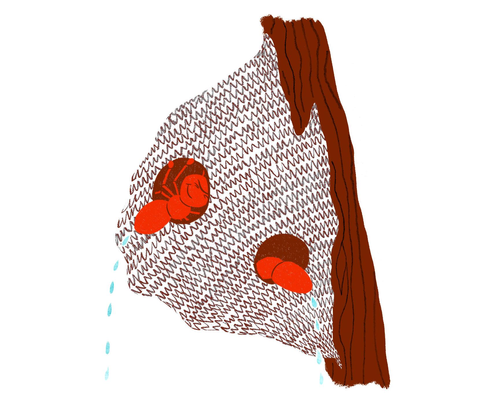 ESR-ant-survival-6-communal-peeing-low-res