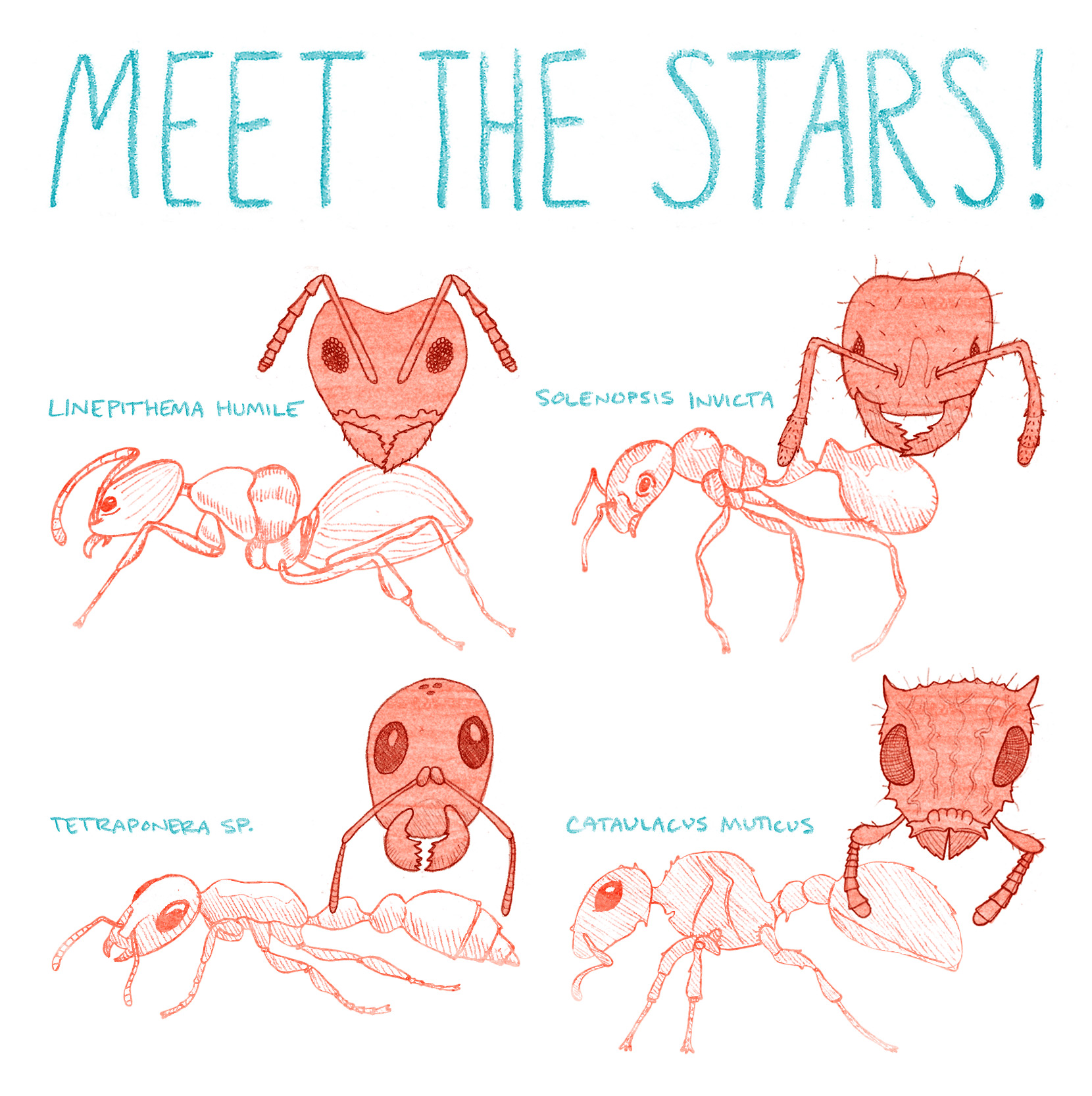 ESR-ant-survival-7-meet-the-stars-A-low-res