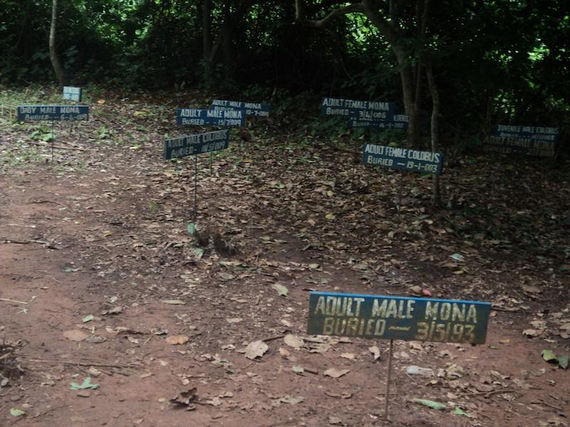 Hills_Monkey graveyard