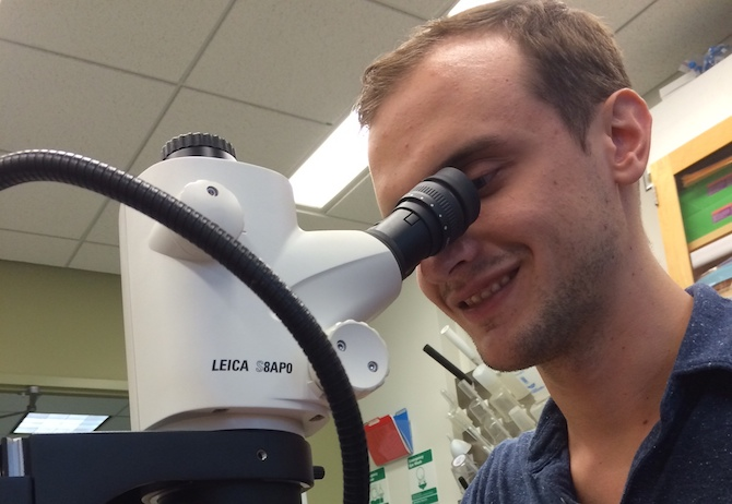 Tyler hard at work identifying ants at the microscope.