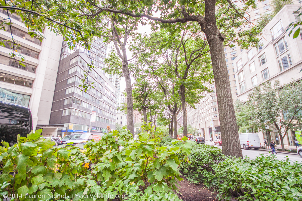 The Most Common Bacteria in New York City Soils are Unnamed, Can't