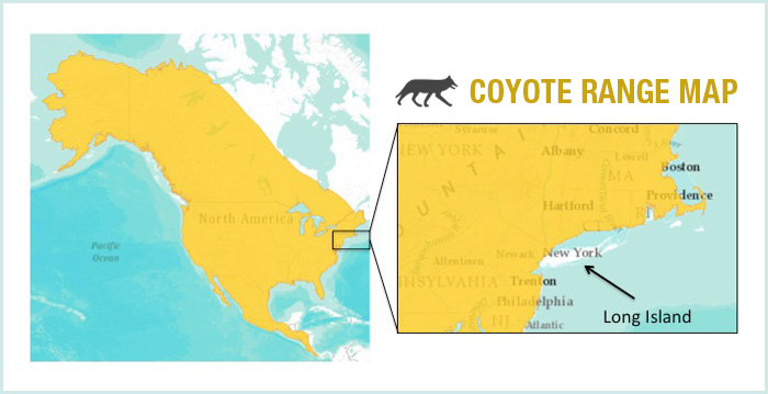 coyote_range_map