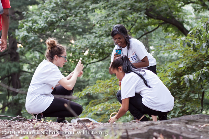 Macaulay Honors College students look for ants during the Bioblitz at NY botanical gardens