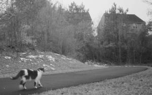 greenway_cat2