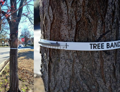 A Tree's Life (A New Citizen Science Project)