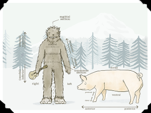 Sasquatch holding a ukulele standing next to a pig with parts of body identified.