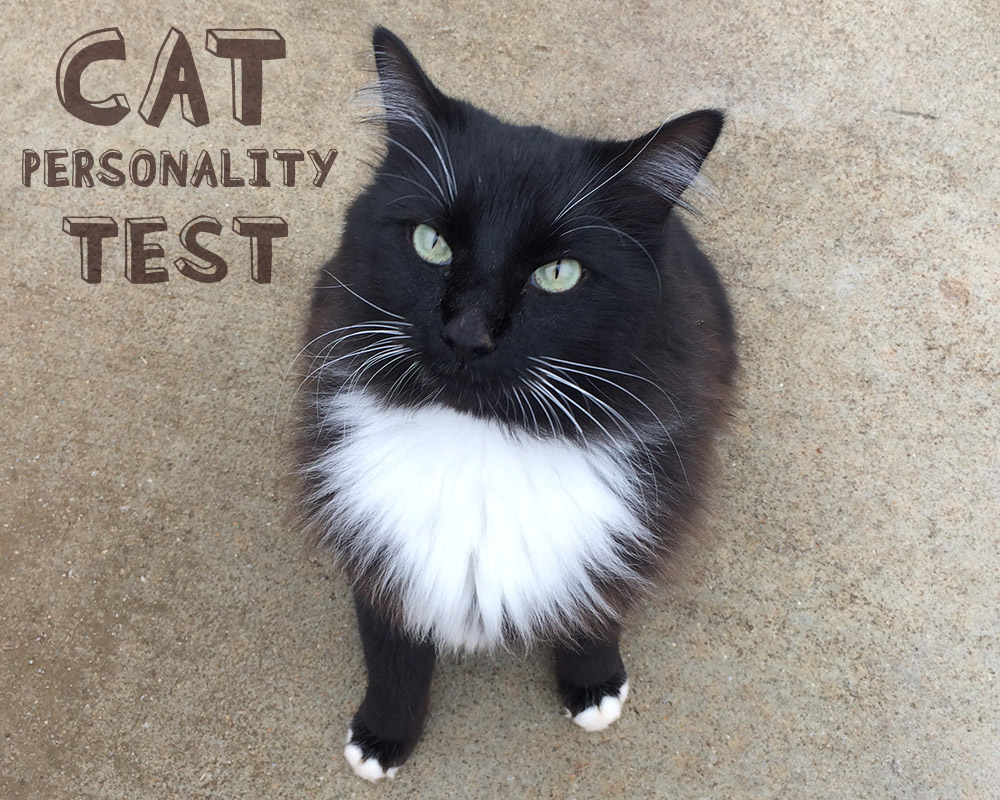 find your cats personality using tests